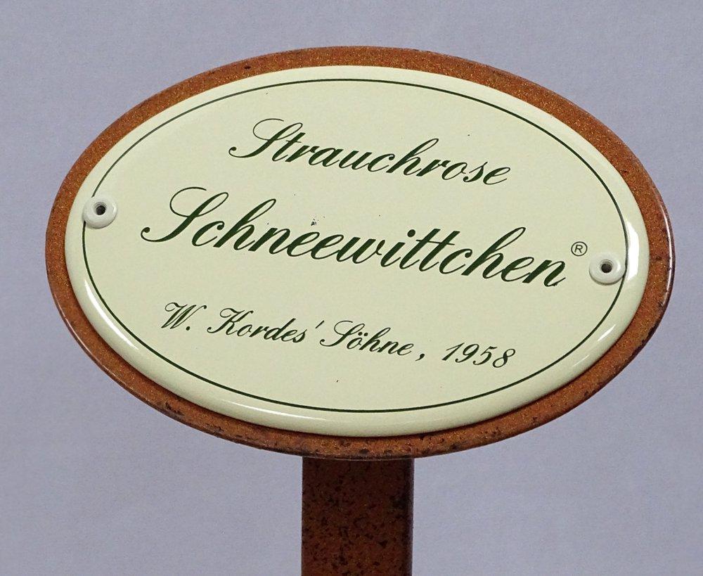 g1911 rosenschild emaille strauchrose schneewittchen w. Black Bedroom Furniture Sets. Home Design Ideas